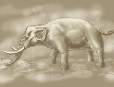 elefantinosic1